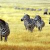 Tanzanijos nacionaliniai parkai ir poilsis Zanzibare (su Dainiumi Kinderiu)