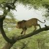 Pažintis su Tanzanija ir Zanzibaru