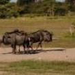 Namibijos lankytinos vietos