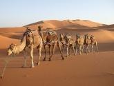 Maroko kultūra