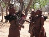 Himba gentis