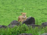 Ngorongoro Krateris