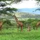Serengečio Nacionalinis Parkas