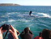 Banginių stebėjimas Hermanus mieste