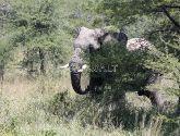 Čiobės (Chobe) Nacionalinis Parkas