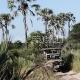 Safaris Okavango deltoje