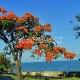 Malavio ežeras (Malawi)