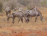 Vakarų Tsavo parkas