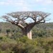 Kelionės į Madagaskarą