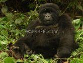 Mgahinga nacionalinis parkas