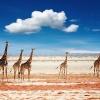 Namibijos ir Botsvanos nuotykiai I