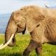 Didysis pietryčių safaris