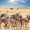Pietų Afrikos saulė I